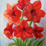 Amaryllis by Jennifer Collyer